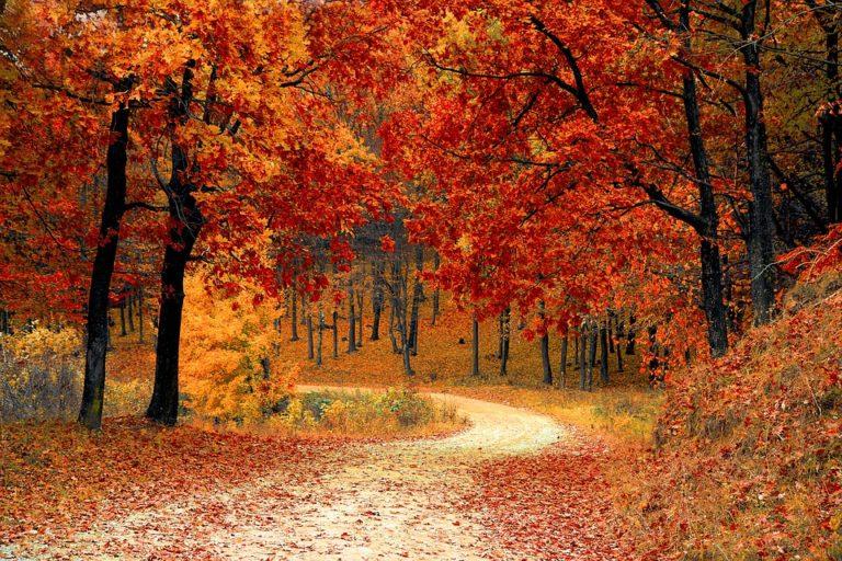 autunno metodo shaolin